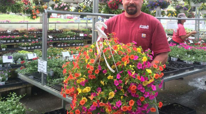 Gorgeous Hanging Baskets In Stock