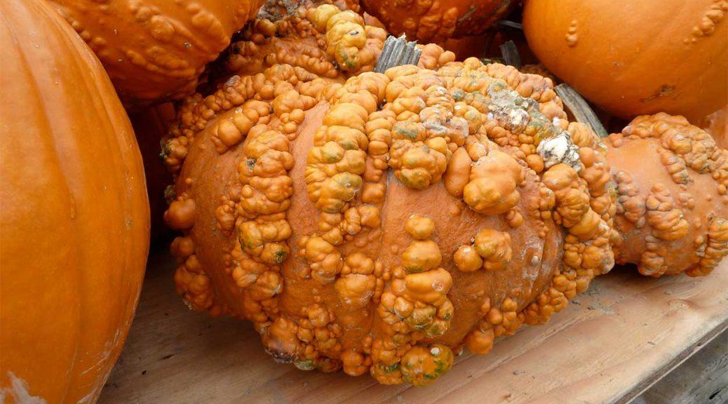 slider-pumpkin-warts